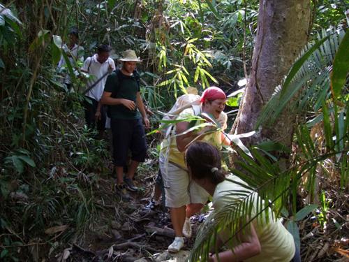 Vào rừng khám phá thiên nhiên kì thú