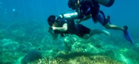 Kì thú khi lặn ngắm san hô ở đảo Hòn Mun