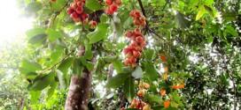 Về với thiên nhiên tại khu du lịch sinh Thái Nhân Tâm Khánh Hòa
