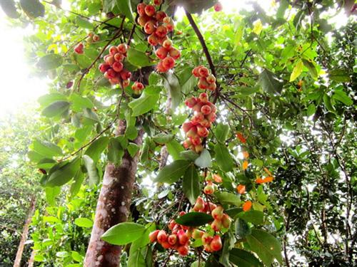 Vườn trái cây tại khu du lịch sinh thái Nhân Tâm