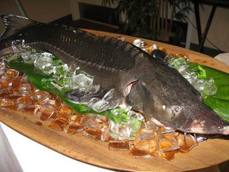 Cá tầm- Đặc sản quý gí từ biển cả.