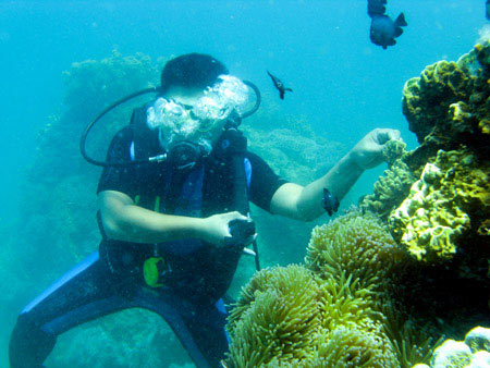 Du khách lặn biển ngắm san hô ở Hòn Mun.