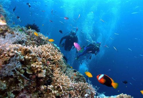 Lặn biển tham quan quá trình nuôi cấy ngọc trai ở Hòn Tằm.