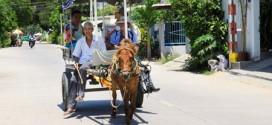 Khám phá làng cổ Phú Vinh bằng xe ngựa